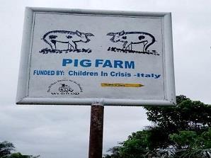 SIERRA LEONE: PIG FARM